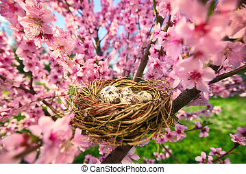 Bird's nest with eggs in a blossoming tree