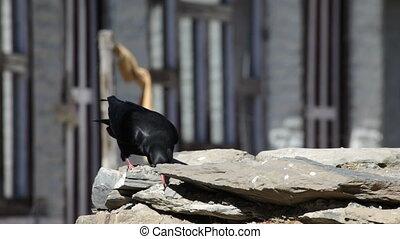 Birds of Chitwan. Nepal.