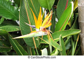 birds of paradise tropical flower
