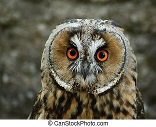 Birds of prey, - Breeding and demonstration even Details and...