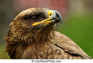 Birds of prey - breeding and demonstration even Details and ...