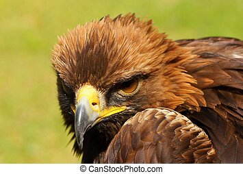 Birds of prey - Details and portraits and other birds of ...