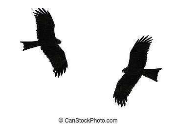 Birds of prey silhouette.