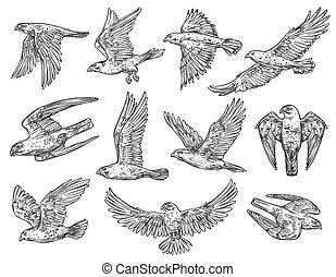Birds of prey sketches. Eagle, falcon and hawk - Eagle, hawk...