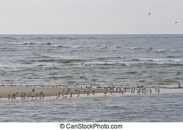 Birds of the Outer Banks, North Carolina