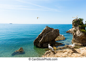 Birds of the sea.