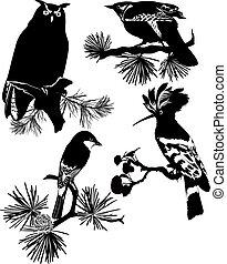 Birds of wildlife cuckoo owl Odud