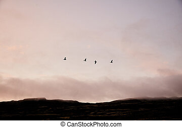 Birds on a background of clouds in Iceland