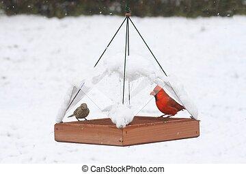 Birds on a Feeder in Snow