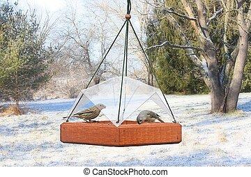 Birds on a Feeder