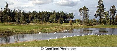 birds on a golf course