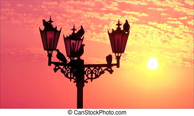Birds on a lamppost at dawn