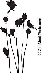 Birds on a poppy heads