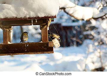 Birds on a snowy feeding trough on a sunny winter day.
