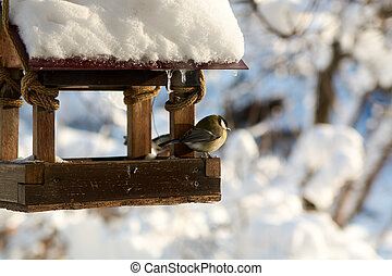 Birds on a snowy feeding trough on a sunny winter day.