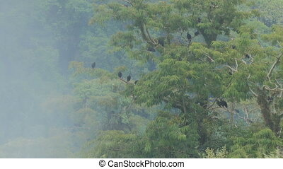 Birds on a tree in the Iguazu National Park
