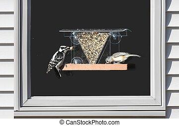 Birds on a Window Feeder