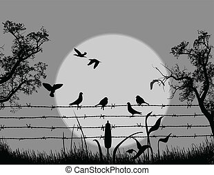 Birds on barbed wire on beautiful landscape