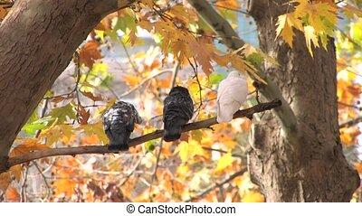Birds on bare branch