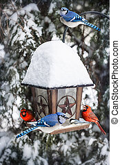 Birds on bird feeder in winter - Bird feeder in winter with...