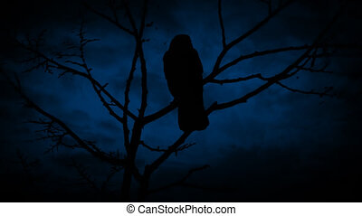 Birds On Branch And Flying Off At Night