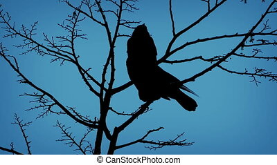 Silhouetted birds perch on tree branches and one flies off