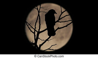 Birds On Branch With Large Moon Behind