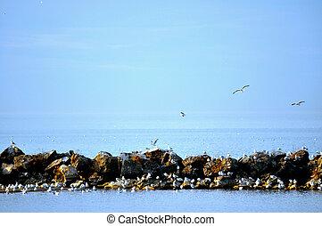 Birds on rocks on Lake Erie