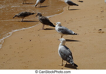 Birds on the beach - Algarve