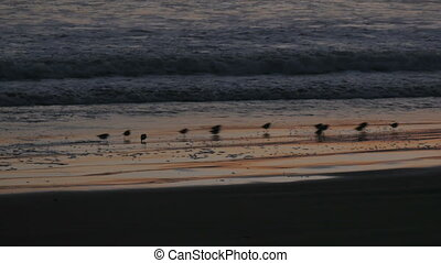 Birds on the beach at sunset