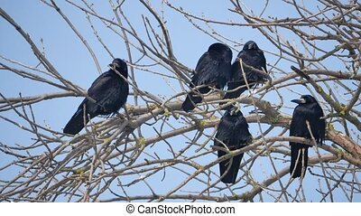 Birds on the branches of an old tree. Silhouettes on a white...