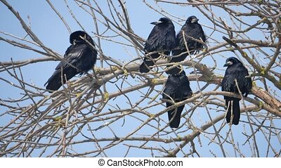 Birds on the branches of an old tree. Silhouettes on a white background.
