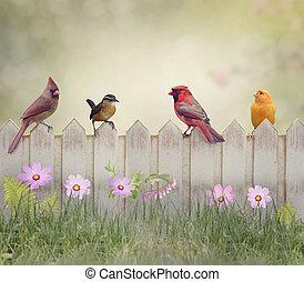 Backyard Birds Perching on Wooden Fence