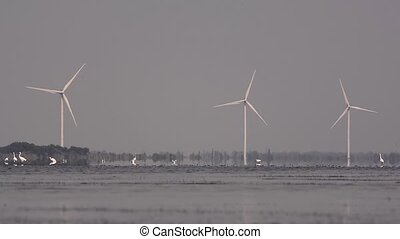 Birds on the lake against the background of wind generators