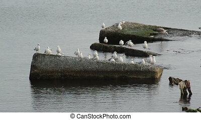 Birds on the rocks