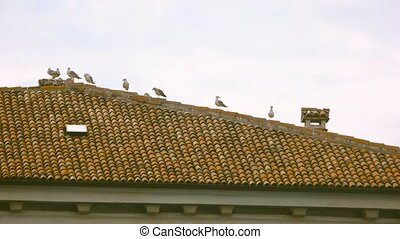 Birds on the roof. Seagull taking off.