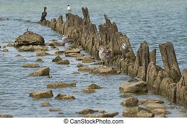 Birds on the sea coast