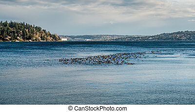 Birds On The Water 4