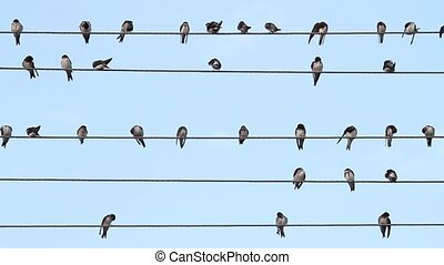 birds on the wire sit like music notes ,wildlife, unique...