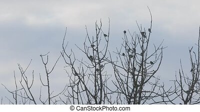 birds on tree branches in spring