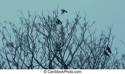 Birds On Tree Branches Perch And Fly Off