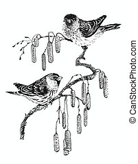 Birds on twig sketch illustration.