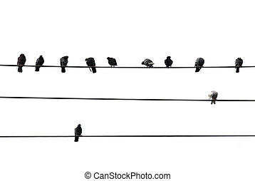 Birds sitting on wires isolated on white background