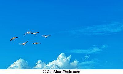 Birds over blue sky background