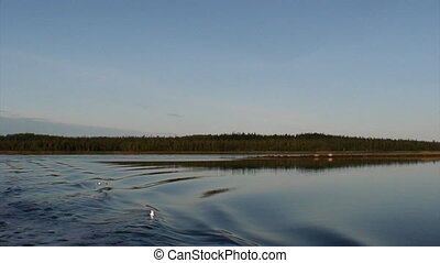 Birds over calm water on background of water in White Sea.