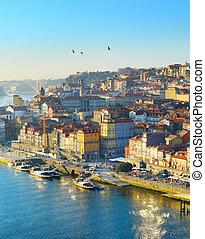 Birds over Porto, Portugal
