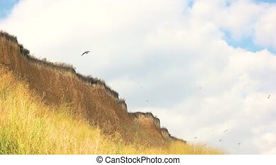 Birds over the cliff. Seagulls in the sky. The priceless...