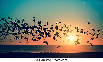 Birds over the sea during a stunning sunset.