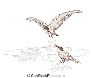 birds pair in spring drawing