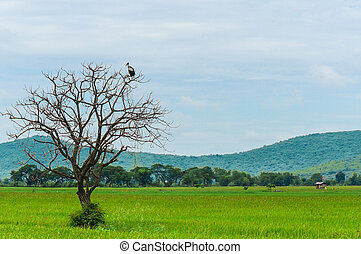 Birds perch on dead tree in the middle of the field.
